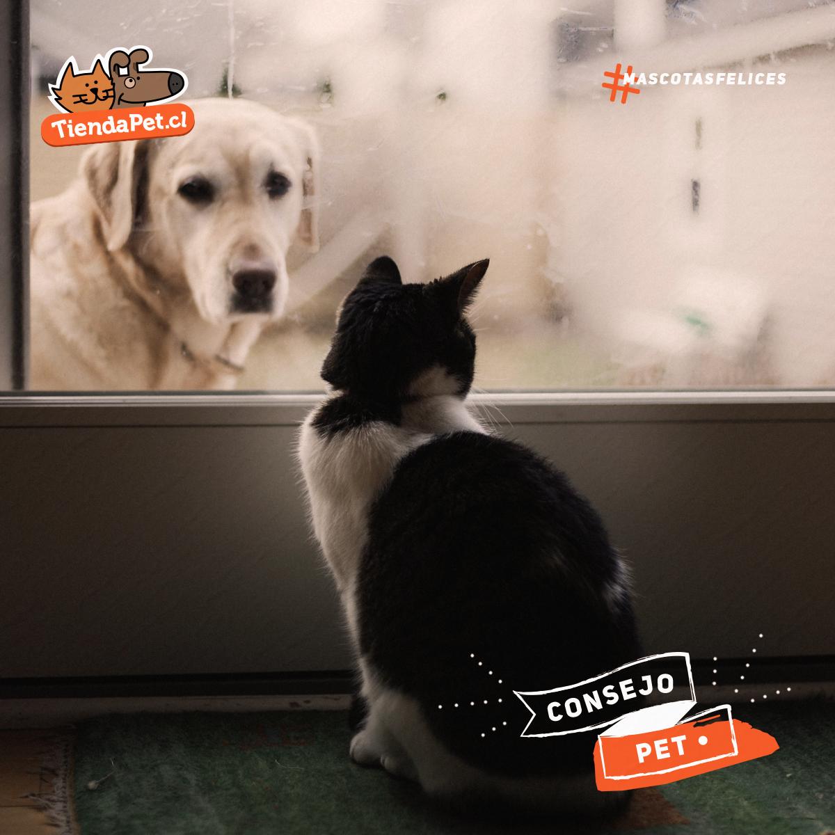 Convivencia de perros y gatos: Tips para una buena relación