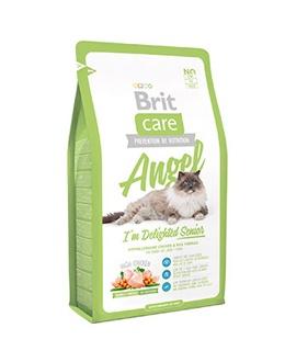 Brit Brit Angel Cat